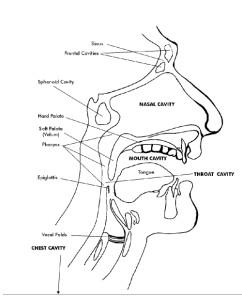 How to improve singing via the resonators