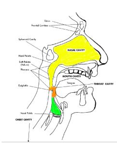 How to improve singing via the pharynx
